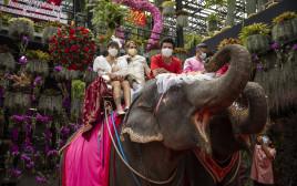 פיל בחתונה, אילוסטרציה