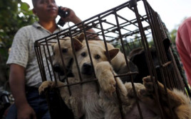 כלבים חסרי אונים בפסטיבל