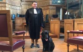 הכלב לול בשירות בית המשפט