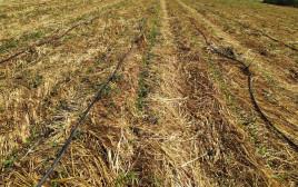 קרקע חקלאית בישראל