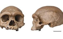 גולגולת איש הדרקון שהתגלתה בסין