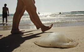 מדוזות בחוף הים