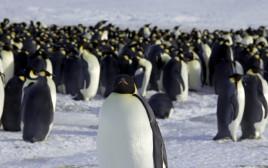 הפינגווין הקיסרי