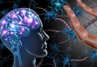 המוח האנושי (אילוסטרציה)