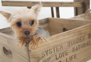כלב בקופסא, אילוסטרציה