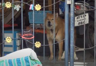 הכלב ממתין לבעליו המנוח