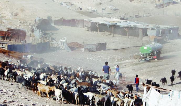 התיישבות הבדואים בנגב
