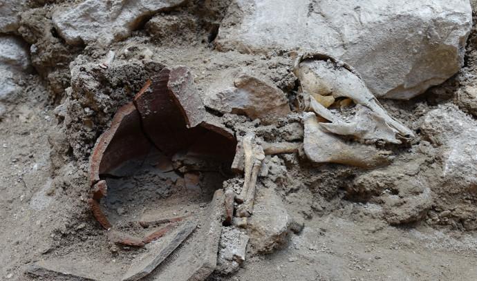 israelo :   Ĉu vi manĝis ne-koŝerajn bestojn?  Porkoskeleto estis malkovrita en la ruinoj de konstruaĵo de la periodo de la Unua Templo