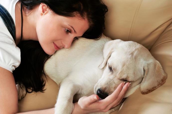 על כלבים וזיקוקים: כך תגנו על חיות המחמד ביום העצמאות