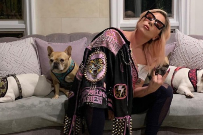 נמצאו כלביה של ליידי גאגא שנחטפו באיומי אקדח: וזה הסכום שתקבל המוצאת הישרה