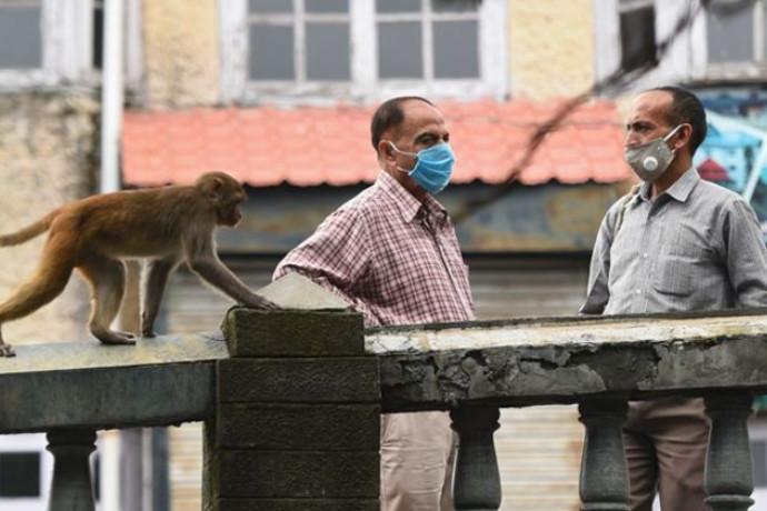 הפושעים החדשים: הכנופייה שאימנה קופים לבצע את העבודה השחורה