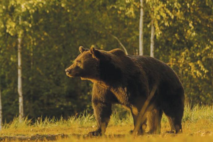 הנסיך והדוב: תקרית דיפלומטית דרמטית נפתחה בין שתי מדינות אירופיות