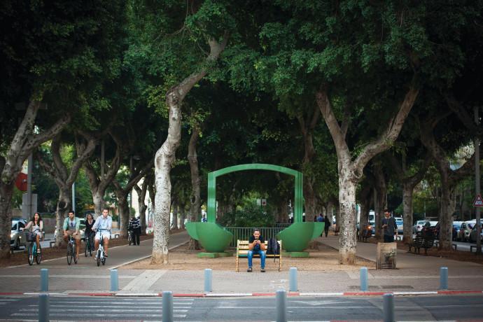 עצי פיקוס בשדרות רוטשילד בתל אביב