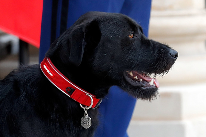 נמו, הכלב של מקרון
