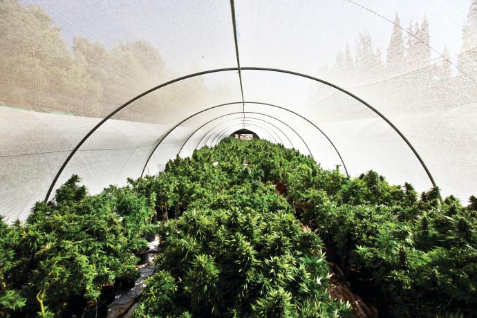 חוות גידול קנאביס, אילוסטרציה