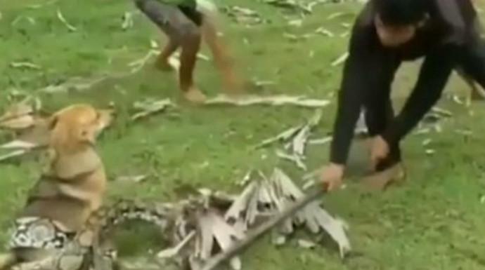 נערים מחלצים את הכלב שלהם מנחש אימתני