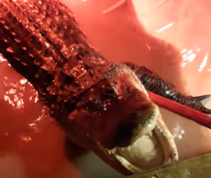 תנין נמצא בג'קוזי בקנזס