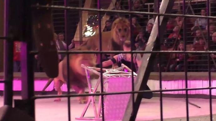 הותקף בידי אריה בקרקס
