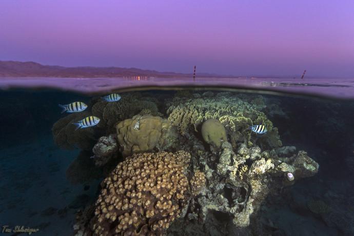 שונית האלמוגים במפרץ אילת בשעת שקיעה