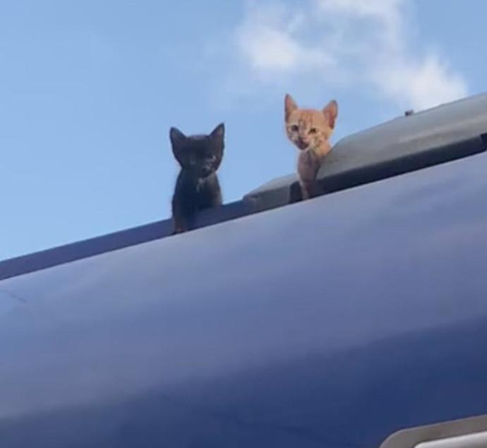 החתולים על הגג