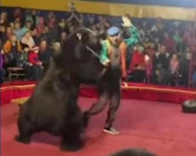 דוב תקף אדם בקרקס ברוסיה