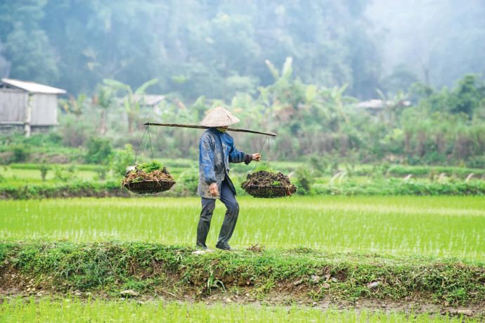 חקלאות בסין