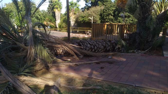 העץ שקרס בקיבוץ בחן