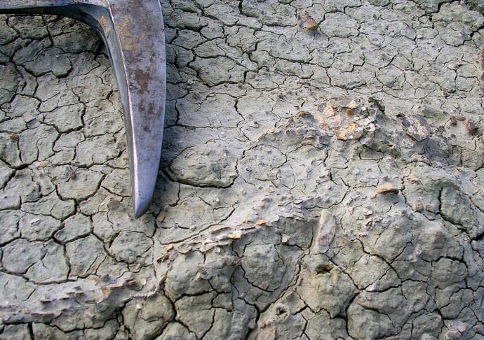 מאובני ביצי דינוזאורים (באדיבות: דרלה זלינסקי)