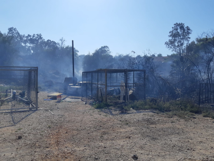 השריפה סמוך לחוף אמנון