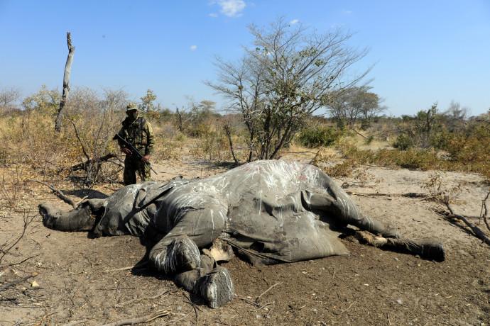 אחד הפילים שמתו בבוטסואנה