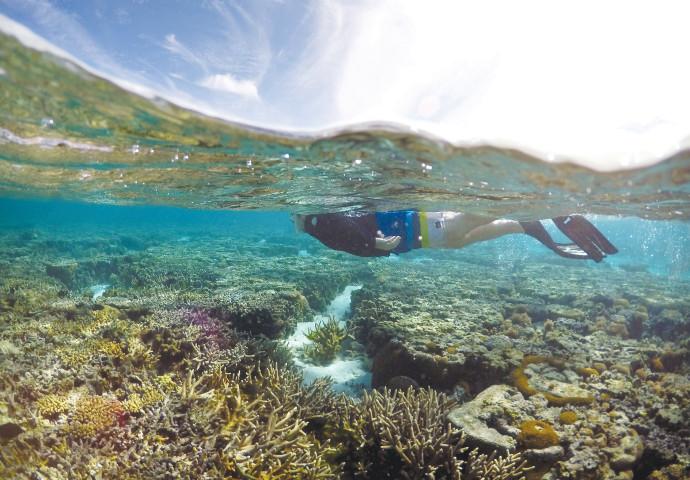 שונית האלמוגים באוסטליה