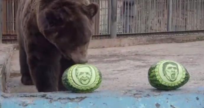 הדוב בוחר - טראמפ או ביידן?