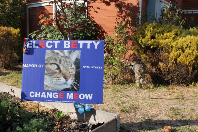 החתולה בטי רצה לראשות הוועד