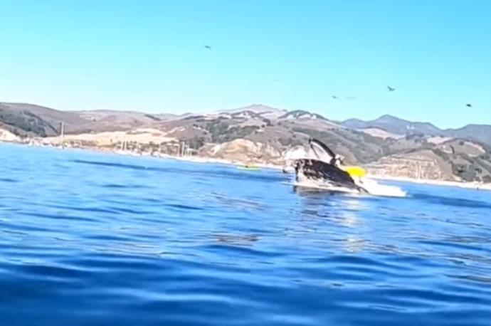 תקיפת הלוויתן את שתי החותרות בקיאק