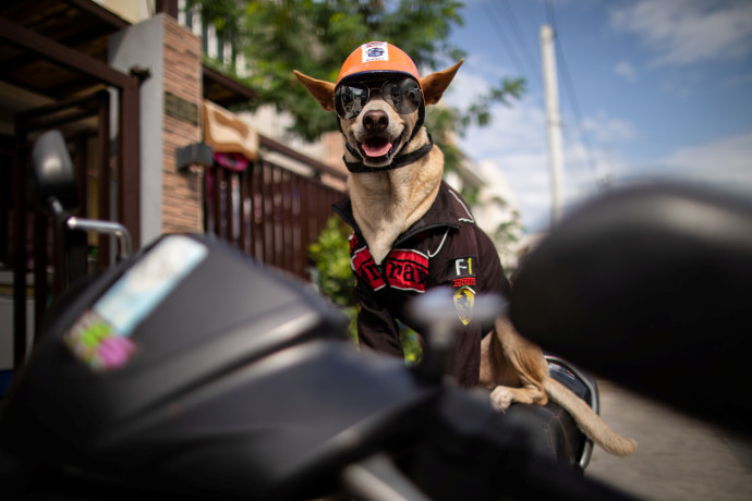בוגי הכלב האופנוען