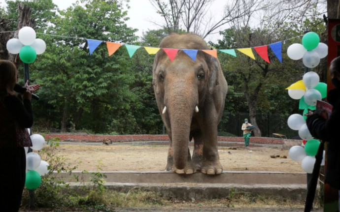 """קוואן, הפיל שקיבל את התואר """"הבודד ביותר בעולם"""""""
