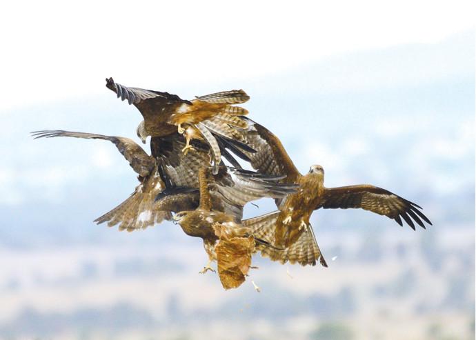 ציפורים בשמי ישראל