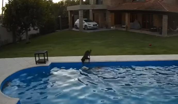הכלבה מצילה את חברתה