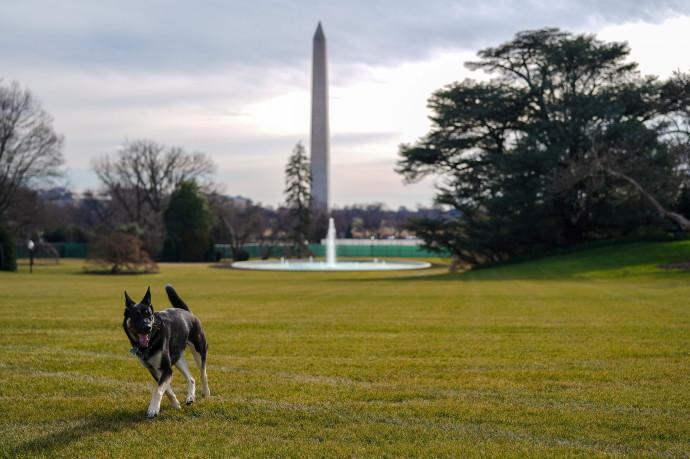 הכלב מייג'ור בבית הלבן