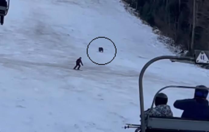 דוב רדף אחרי גולש סקי