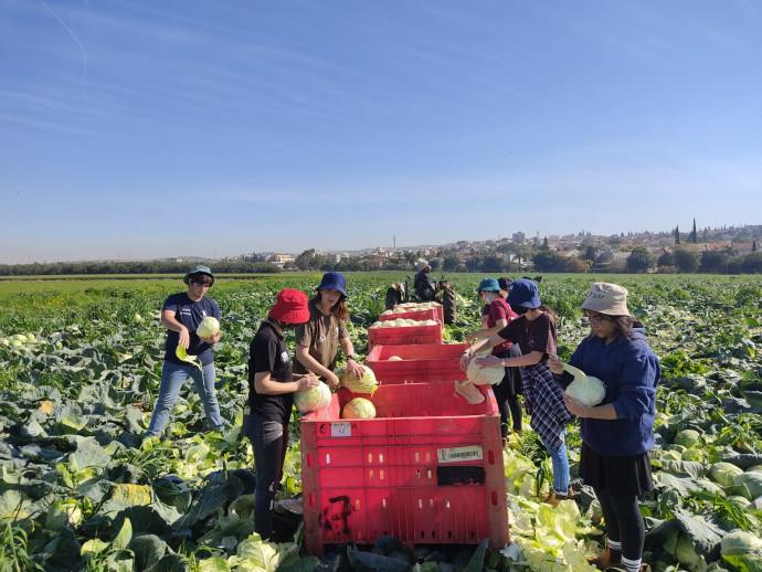 התנדבות בחקלאות בשנת שירות