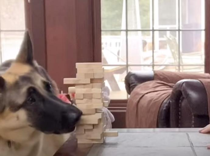 הכלבה אניה משחקת ג'אנגה