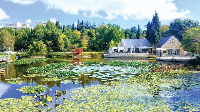 אגם הגן הבוטני סתיו 2020