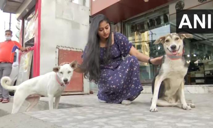 הסטראט-אפ החדש שיגן על חיות הרחוב
