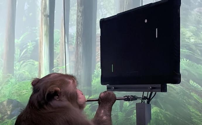 קוף משחק במשחקי וידאו