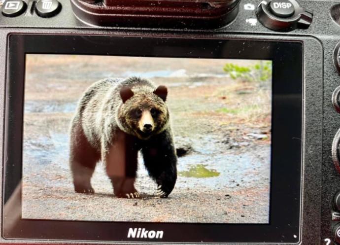 הדוב שתקף את קרל מוק