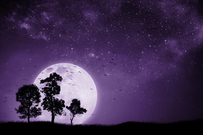 עצים על רקע הירח, אילוסטרציה