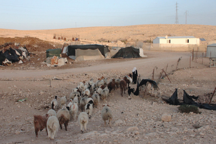 עדר כבשים סמוך ליישוב בדואי בנגב