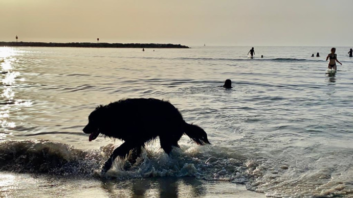 כלב מתרענן בחוף הים בתל אביב