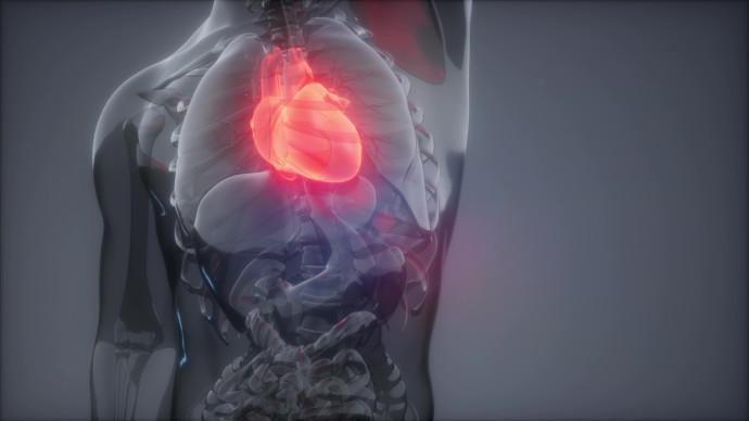 סיכון למחלת לב (אילוסטרציה)